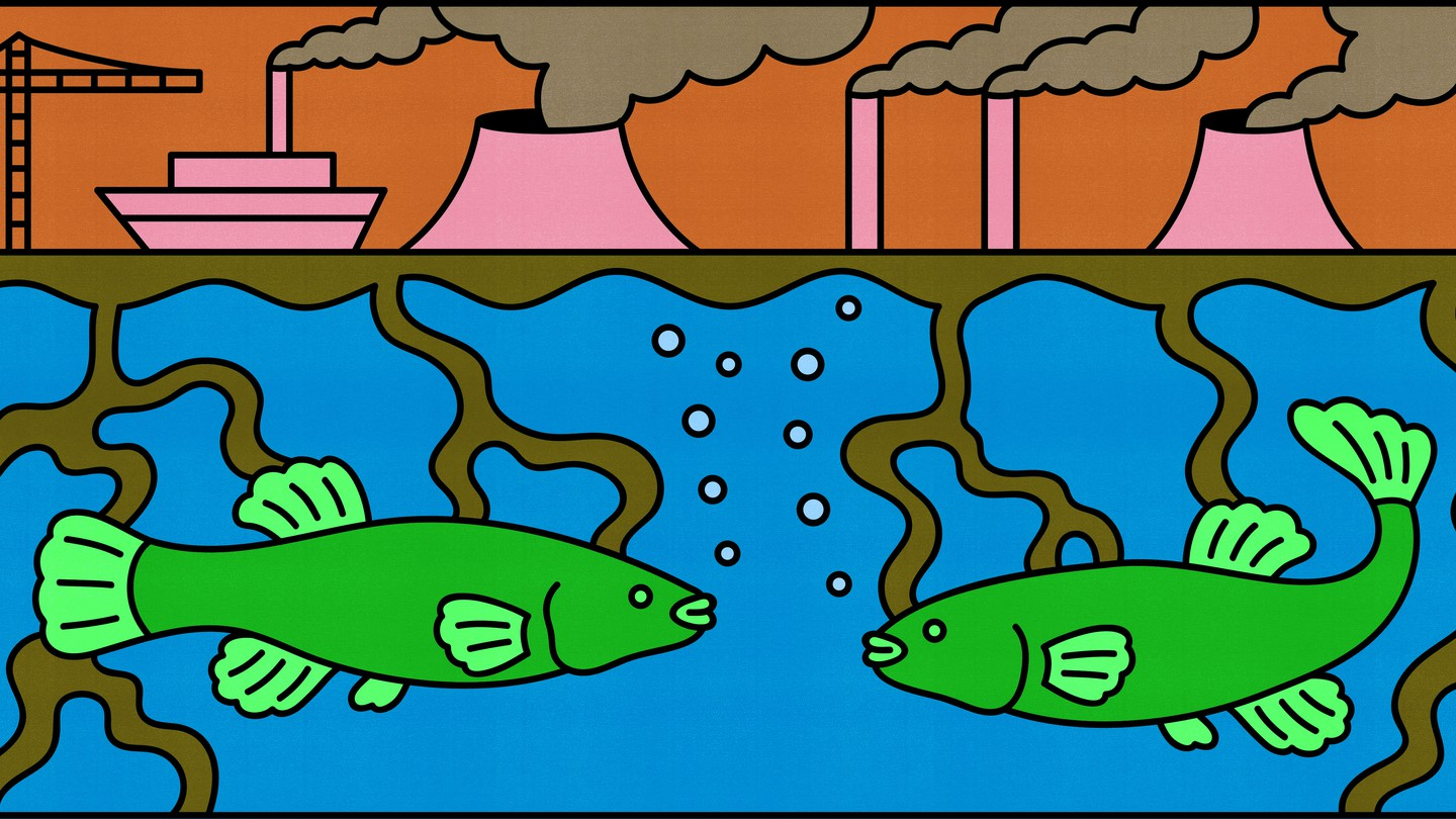 Two fish look at each other in a very polluted river