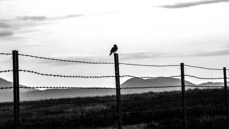 An image of barbed wire with mountains in the background.