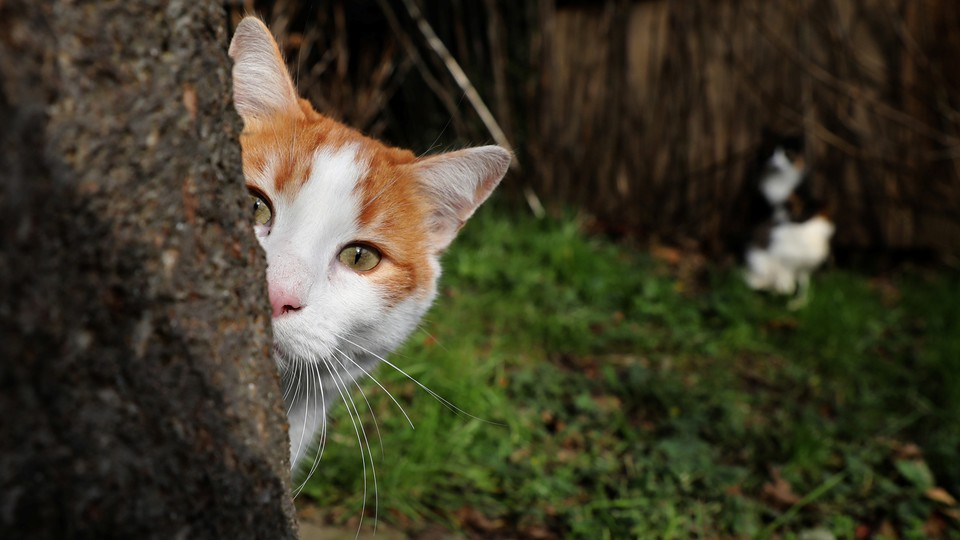 A cat hides behind a tree.