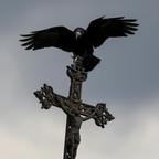 A crow perches on a gravestone in Ukraine.