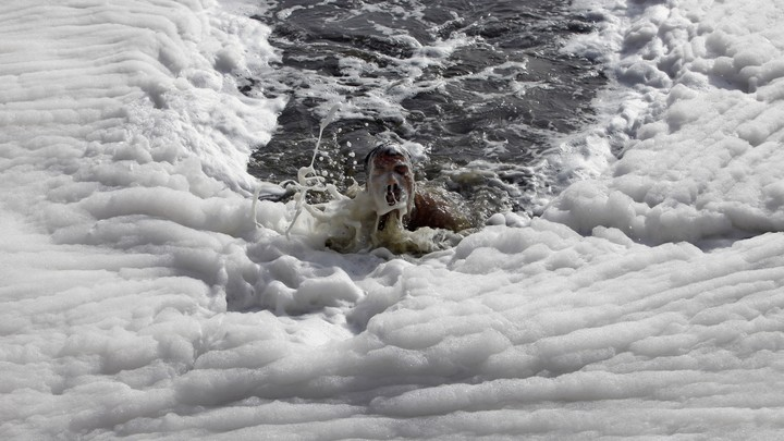 A white foam of chemical pollution blankets New Delhi's Yamuna river.