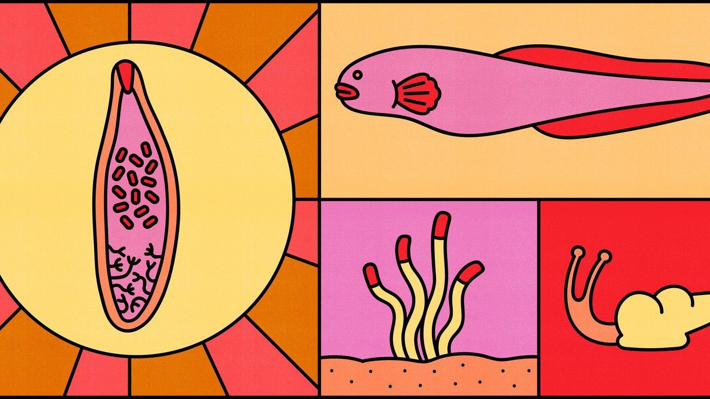 An illustration representing trematode life stages—a worm, a fish, larvae, a snail