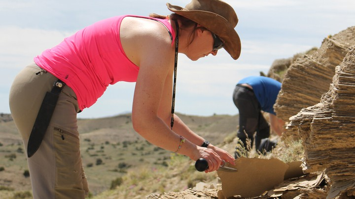 The stegosaur expert Susie Maidment studying a piece of sediment
