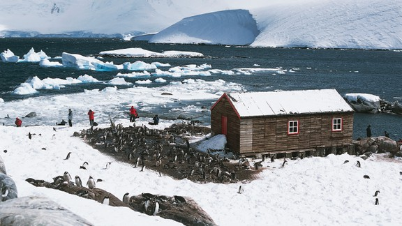 Penguins around the old British base of Port Lockroy in Antarctica