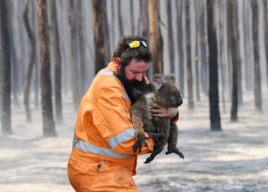 Photos Animals Rescued From Australia S Bushfires The Atlantic