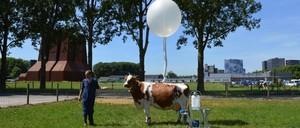 A proposal for a milk-vending cow in a public park.