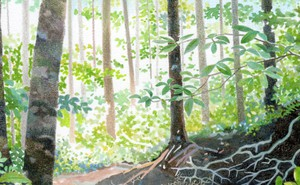Illustration of a sunny forest