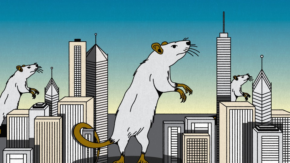 An illustration of rats among skyscrapers