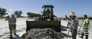 A man driving a bulldozer and workers with pitchforks clean up dead fish on Coquina Beach in Bradenton Beach, Florida.