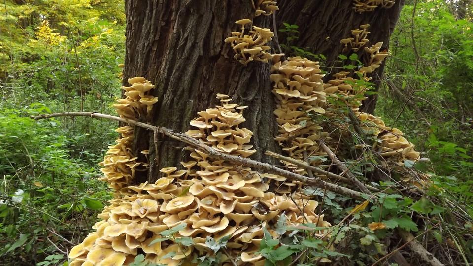 Mushrooms growing on a tree