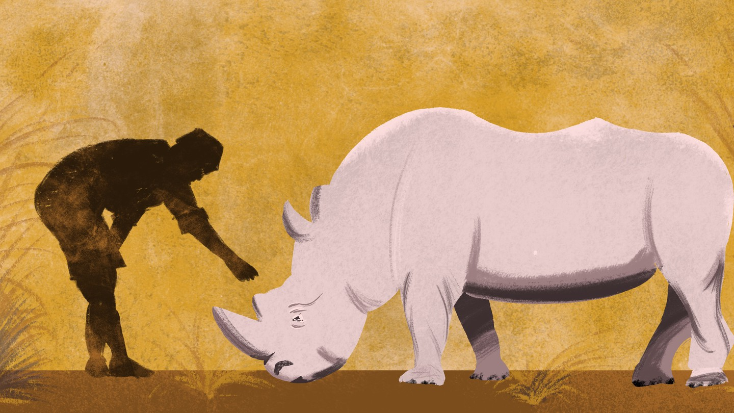 A human silhouette reaches out to touch a rhino.