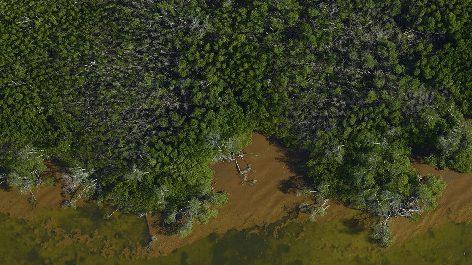 An aerial photo of trees along a coast