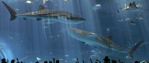 Aquarium visitors look at the animals