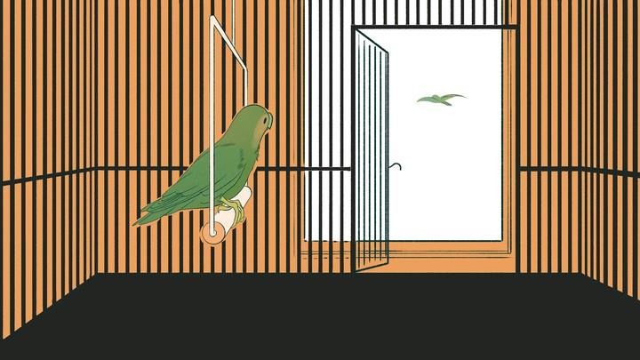 An illustration of a bird watching another bird fly away.