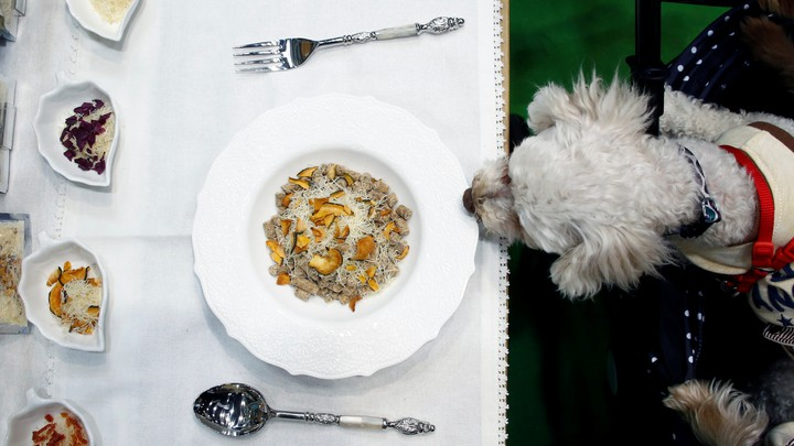 A dog looks at plate of food on a table