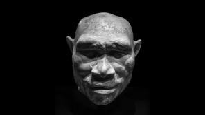 A model of homo erectus