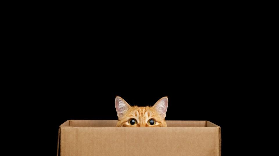 An orange tabby in a box