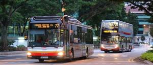 Singapore buses