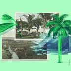 A collage of postcards and palms trees of the Florida shore