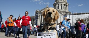 Oklahoma teachers (and their dogs) protest over school funding on April 9.