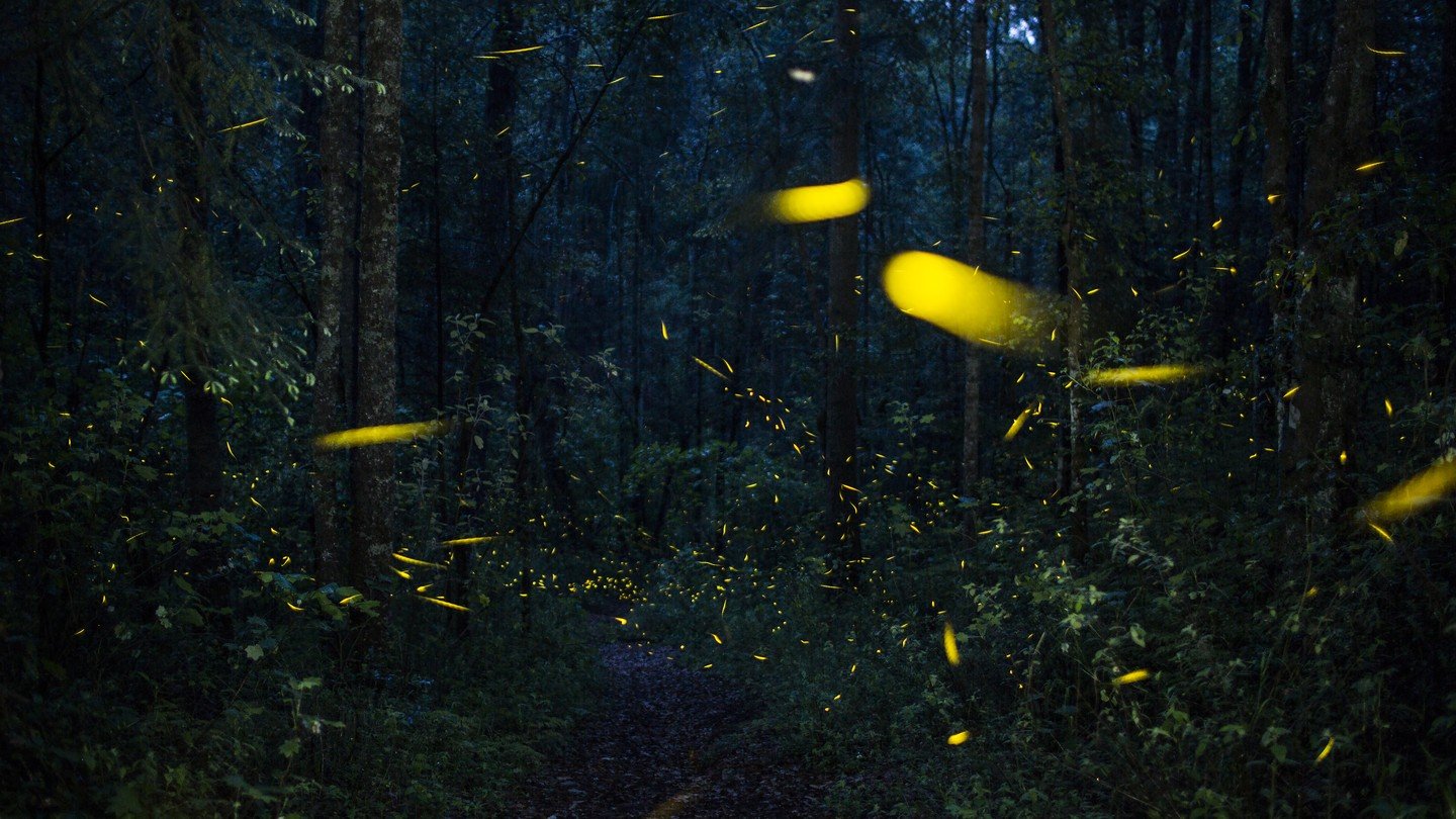 fireflies in a forest at dusk