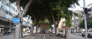 Tall, arching ficus trees line a busy boulevard in Tel Aviv.