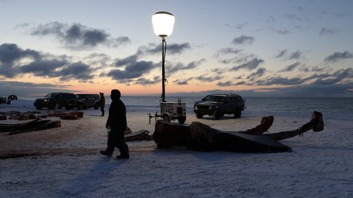 A man passes the giant bones of a bowhead whale in a field near Utqiaġvik, Alaska.