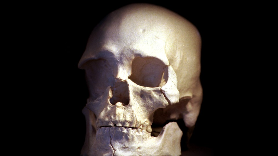 A plastic cast of a skull