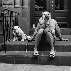 man sitting on steps of building with two dogs