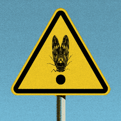 An illustration of a cicada on a stop sign