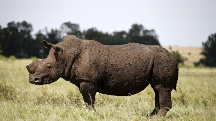 Catch Rhino Poachers