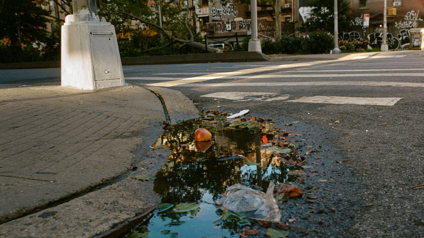 puddle reflecting trees with apple and trash floating