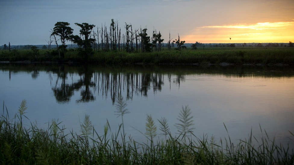 """The sun rises on a """"ghost forest"""" near the Savannah River in Port Wentworth, Georgia"""