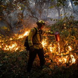 A firefighter lights up dried brush