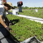 A green roof in Springfield, Ill.