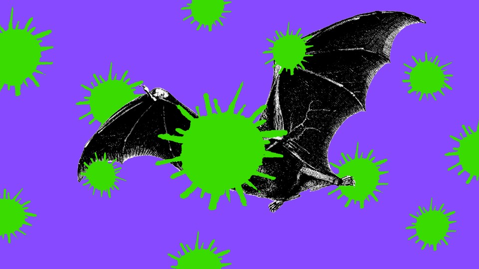 An illustration of a bat surrounded by giant coronaviruses
