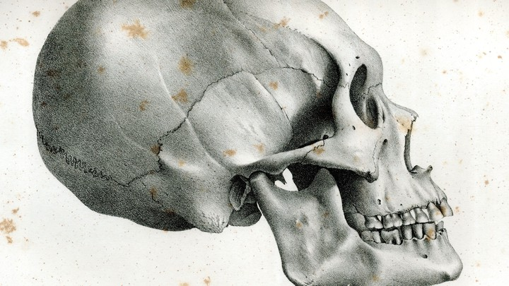 "A diagram of an ""ancient Peruvian skull"" from Samuel George Morton's <i>Crania Americana</i>"