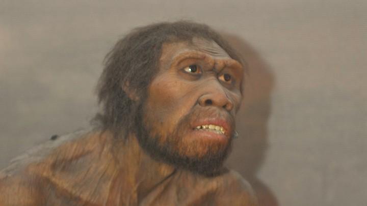 An artist's impression of <em>Homo Ergaster</em>