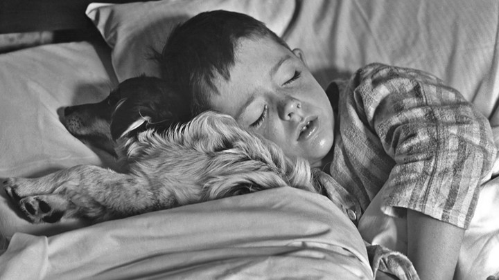 Boy sleeps with his dog in a bed
