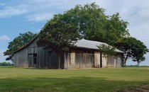 A weathered barn near Drew, Mississippi, surrounded by trees and green grass