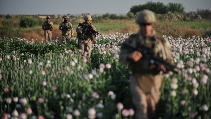 Members of the U.S. military walk through an opium poppy field in Helmand province, Afghanistan, in 2011. Nearly a decade into the war in Afghanistan, opium poppies are still the major crop for many farmers and a big source of income for the Taliban despite expensive efforts to stamp out cultivation.