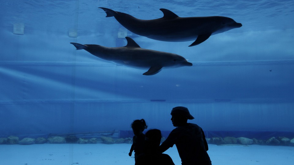 A family looks at dolphins in an aquarium.