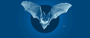 An illustration of a bat flying in the night sky